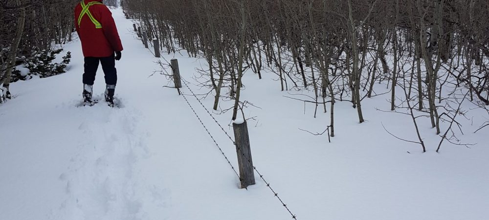Waterton Boundary Fence During Winter - Westco Construction