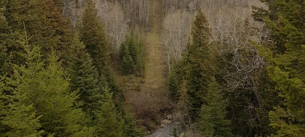 Waterton Lakes National Park Forest - Westco Construction