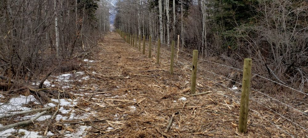Waterton Forest Clearing - Westco Construction