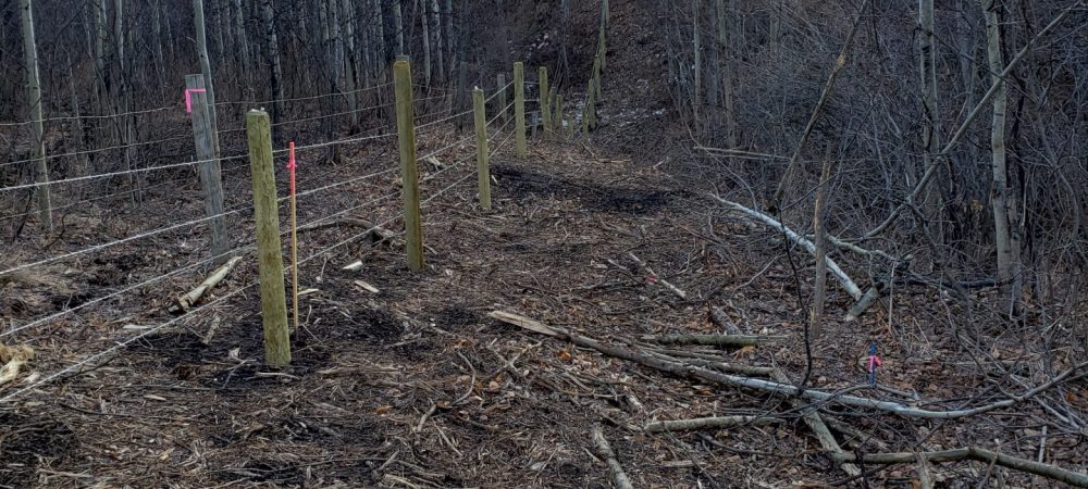 Waterton Boundary Fence Clearing